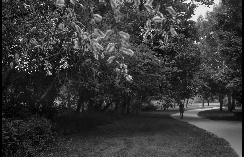 hanging leaves, trees, backlit, winding pathway, Carrier Park, Asheville, North Carolina, Rollei 35, Ilford FP4+, Ilford Ilfosol 3 developer, 6.11.18