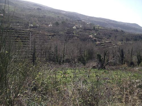 Tout Berry Farms at Nabeh El Saffa b 2014   by toutberryfarms