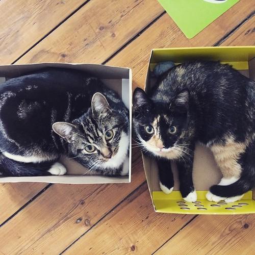 Katzen Boxen