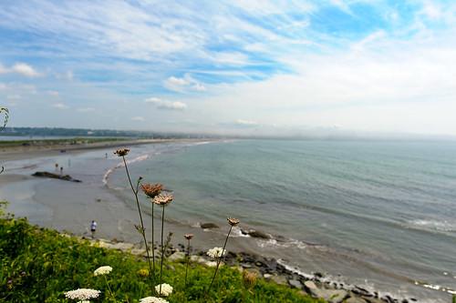 rhodeisland cliffwalk outdoors sunlight nikon d700 newport usa unitedstates us eastonbay beach plants flowers 20mmf18g eastonbeach water clouds