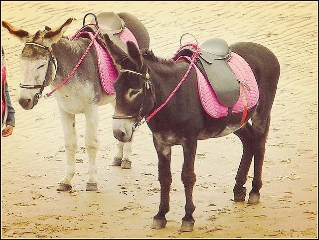 Two Beach Donkeys ..