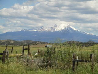 Summer Fences in High Country