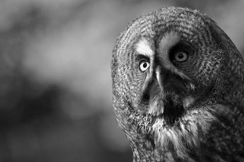 bird | by Facine2b