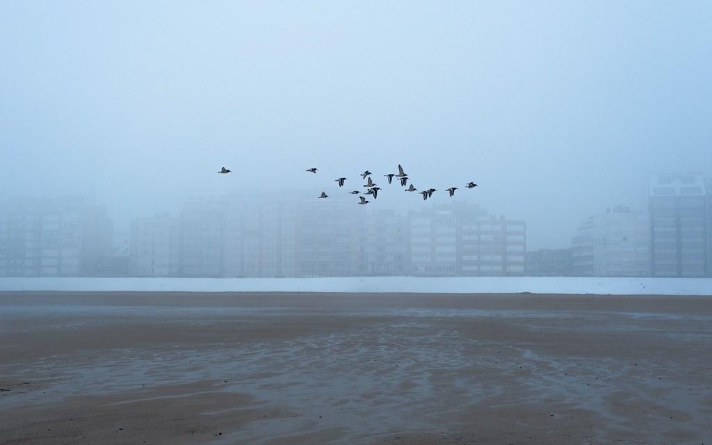 鳥群。圖片來源:Anunturi gratuite@Pexels(CC0)。