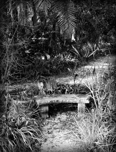 gardenbenchinmonochrome sugarmillgardens scenic landscape parkbench plants botanical paths nature garden outdoors portorangeflorida park monochrome blackandwhite