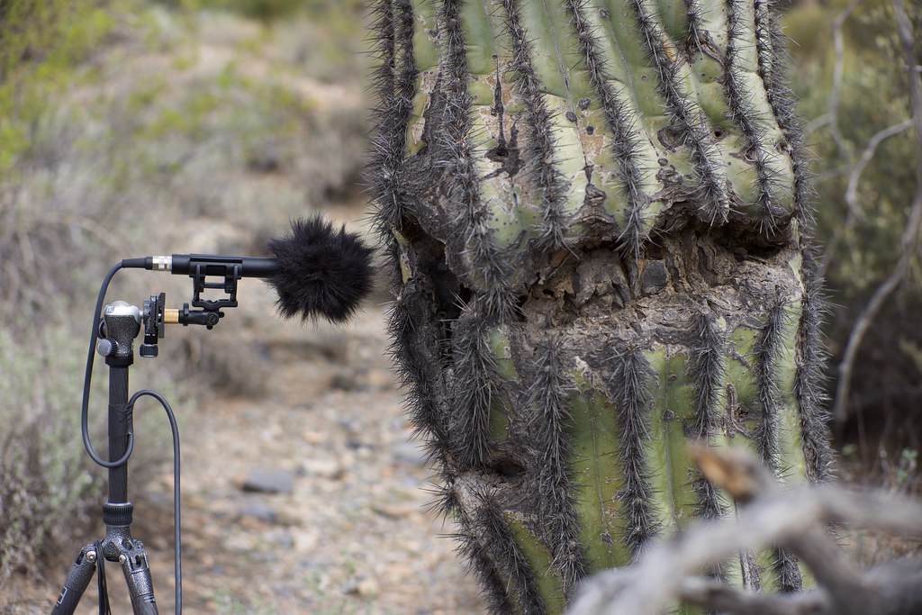 Interview with a saguaro