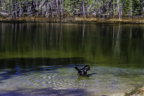 northernlake springfedlake northernontario northernontariocanada canine canines pet pets dog dogs