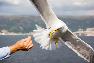 Gaviota - Seagull   by albertma.