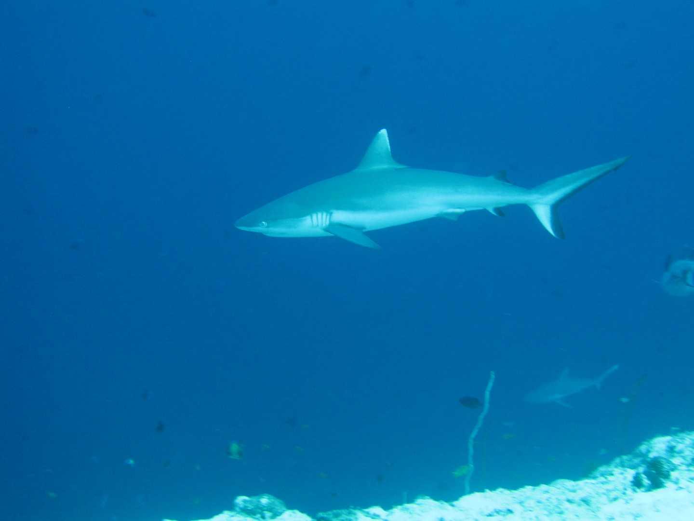 2011 - Malediven This