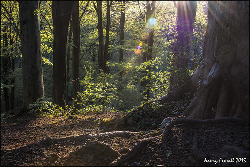 uk trees england southwest woodland bristol woods eveningsun april eveninglight sunsrays 2015 blaisecastleestate blaisecastleestatebristol nikond7100 photographybyjeremyfennell
