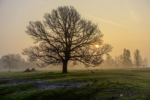 mist sheep earlymorning sunrise thebestofhdr flickrsportal