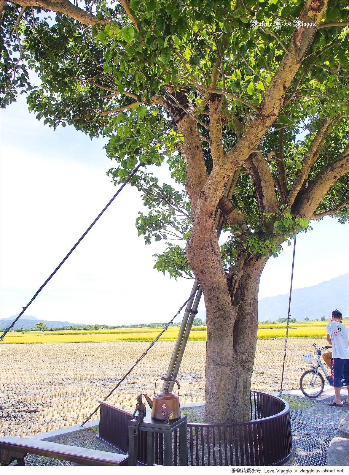 【台東 Taitung】池上伯朗大道 夏天稻田成熟的季節 租一台單車馳騁在金色稻浪中 @薇樂莉 Love Viaggio | 旅行.生活.攝影