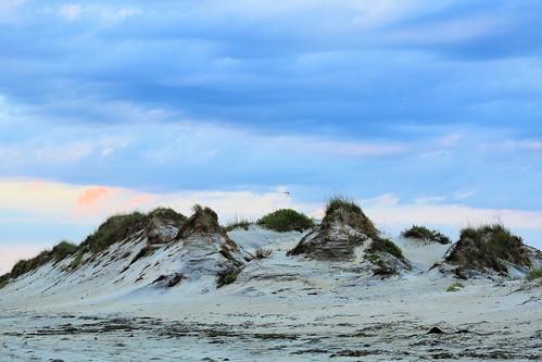 photosbymch sunrise beach clouds capehatterasnationalseashore bodieisland outerbanks obx northcarolina canon 5dmkiii 2016 outdoors seagull