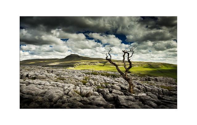 Twistleton Tree - Explore 13.09.2016 No.12