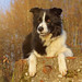 Canis familiaris familiaris - Photo (c) Corinne Benavides, μερικά δικαιώματα διατηρούνται (CC BY-NC)