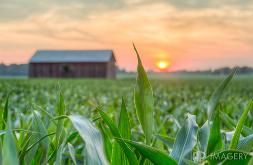 sunset usa barn rural corn dof farm kentucky ky depthoffield