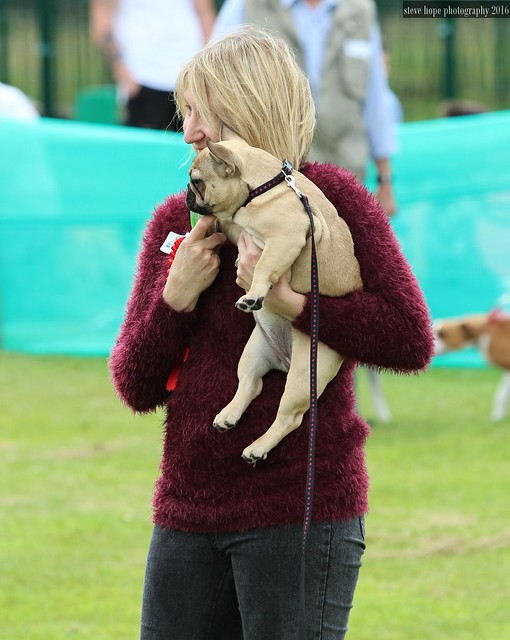 Jerry Green Dog Rescue North Lincolnshire Summer Show 2016