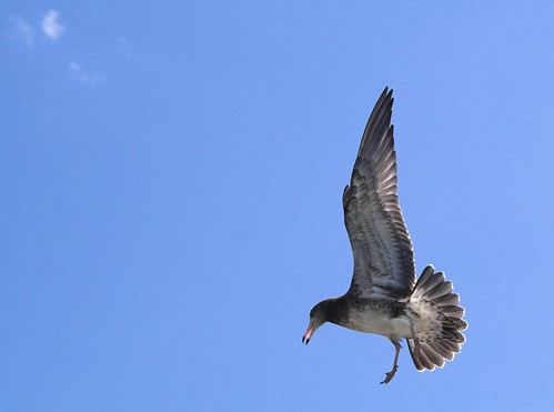 Seagull in Flight | by laurenz