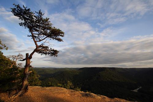 sky cliff tree topv111 pine clouds forest landscape topv555 topv333 kentucky topv1111 topv999 100v10f limestone topv777 overlook 1022mm berea indianfortmountain