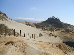 Cape Kiwanda Fence