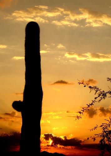 arizona cactus sky orange clouds sunrise desert cloudy ominous redsky distance