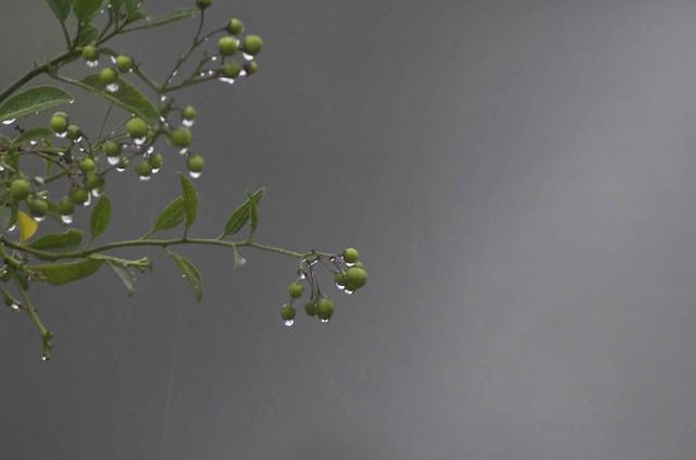 Rainy-Grey-Day