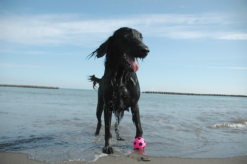beach,izu