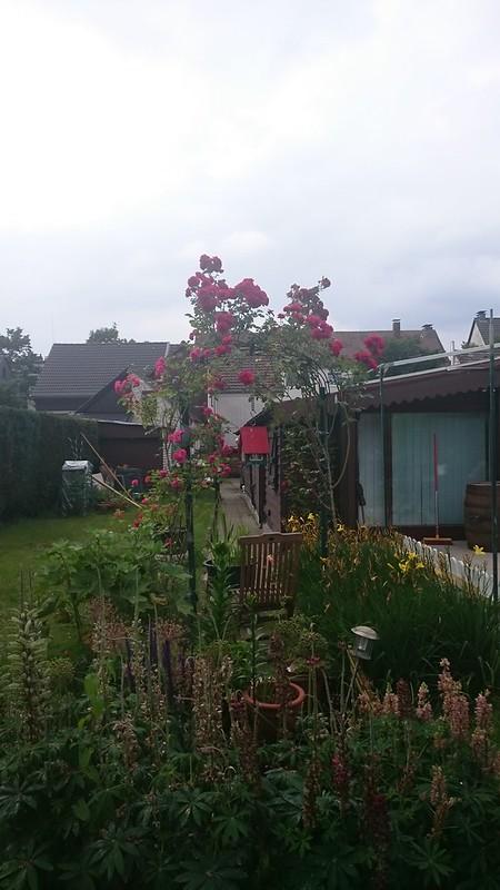 Garten2015-70