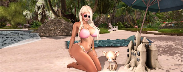 Sandcastles and Chihuahua's