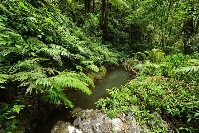 Montagne d'Ambre rainforest
