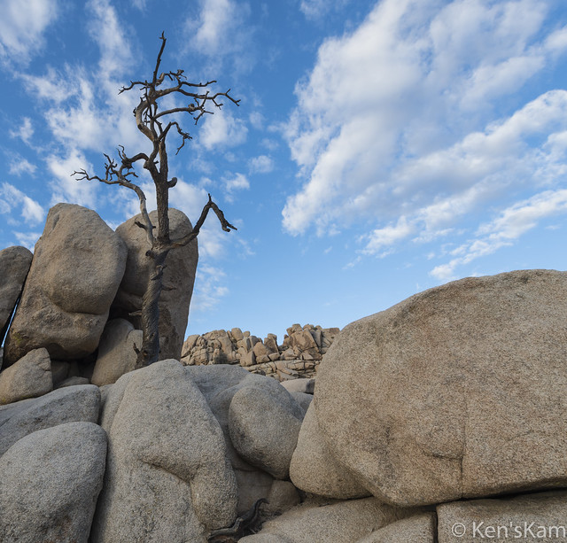 Dead Tree and Boulders-1