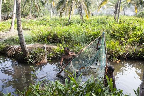 fishermen fisherman fish fishing canal stream backwaters kerala india munroe island water brackish net nets coconut palms men man hairy bamboo poles munrothuruthu