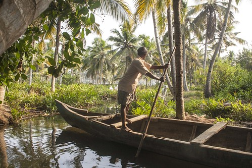 kerala india munroe island paradise coconut palm water canal waterway canoe boat oar reflections goat goats white brown munrothuruthu