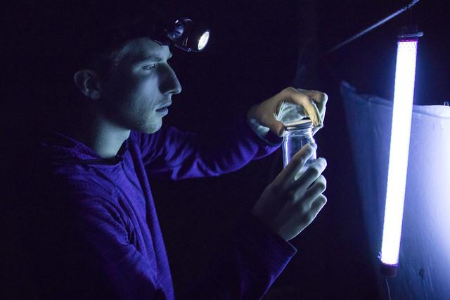 The Night World: Kyhl Austin '18 on the Beauty of Maligned Moths