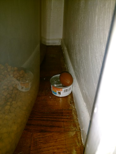 Lansing, Michigan - Cat Toy on a Can   by Darrell Harden