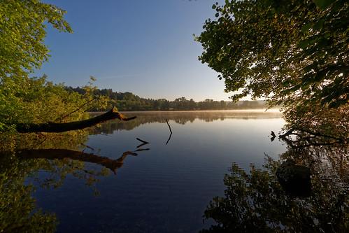 lake katzensee water mirror trees sunlight sunrise morning
