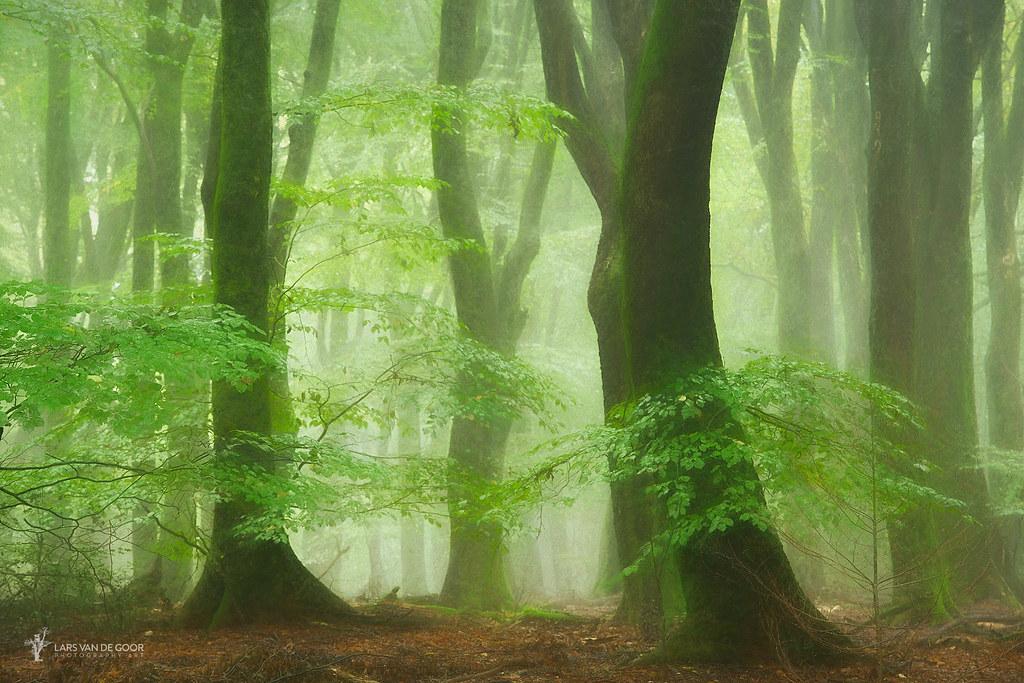 Tutu Wood | Lars van de Goor | Flickr