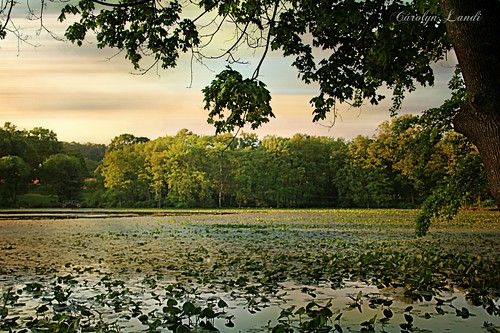 carolynlandi sunset lake pond lilies water trees treeline landscape scenic saylorsburgpa pennsylvania hamiltontownship nature reflections plants pads leaves sky clouds usa