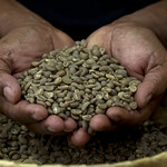 50334-001: Support for Preparation of a National Coffee Sector Development Plan for Timor-Leste