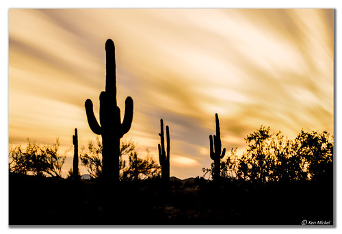 arizona cacti cactus clouds cloudy desert estrellla fineart goodyeararizona kenmickelphotography landscape landscapedesert longexposure longexposurephotography misc outdoors plants saguaro sunsets backlighting backlit nature photography goodyear unitedstates us