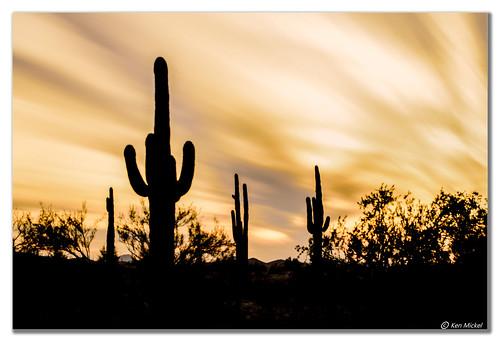 arizona cacti cactus clouds cloudy desert estrellla fineart goodyeararizona kenmickelphotography landscape landscapedesert longexposure longexposurephotography misc outdoors plants saguaro sunsets backlighting backlit nature photography goodyear unitedstates us