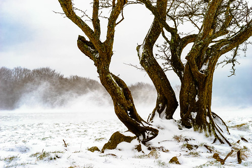 2018 trees an1photography an1uk alannewman anewman winter tree an1 snow bassaleg wales unitedkingdom gb