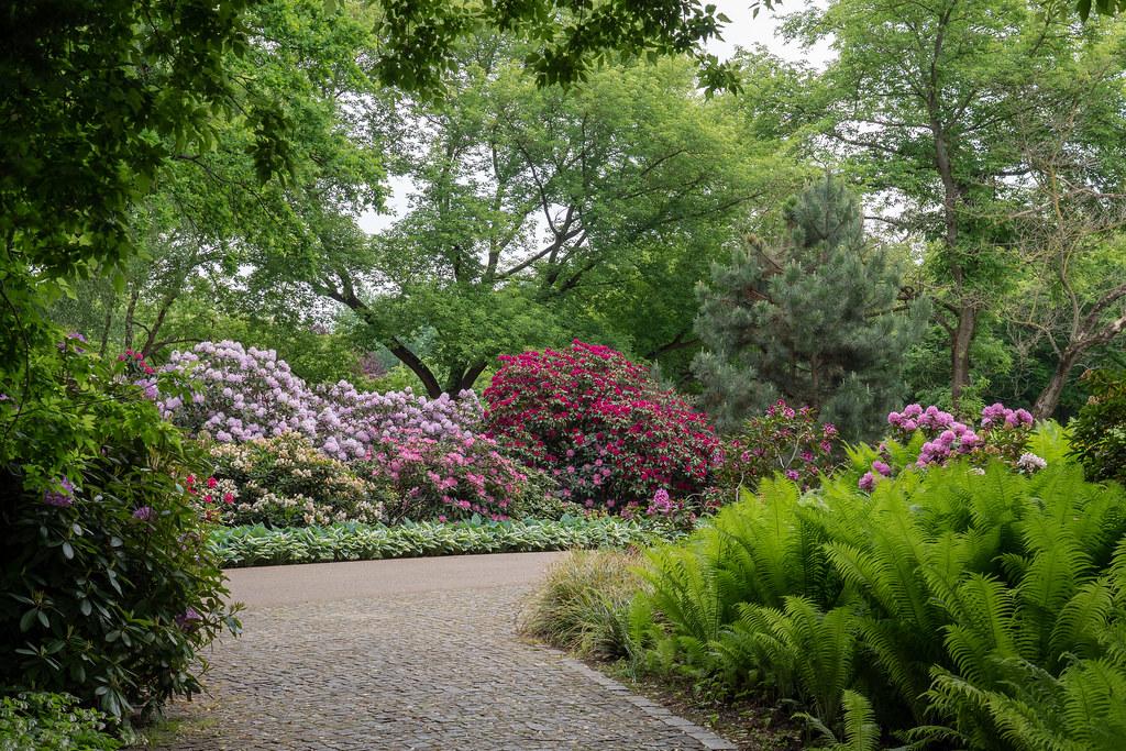 Berlin Gärten Der Welt Rhododendronhain Berlin Garden Flickr