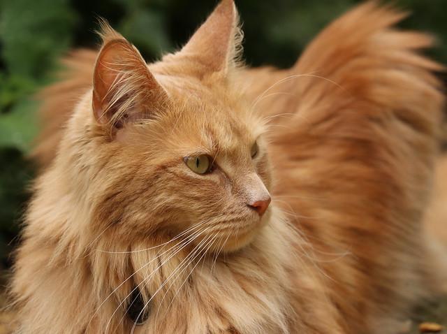 IMG_4688  neighbour's cat