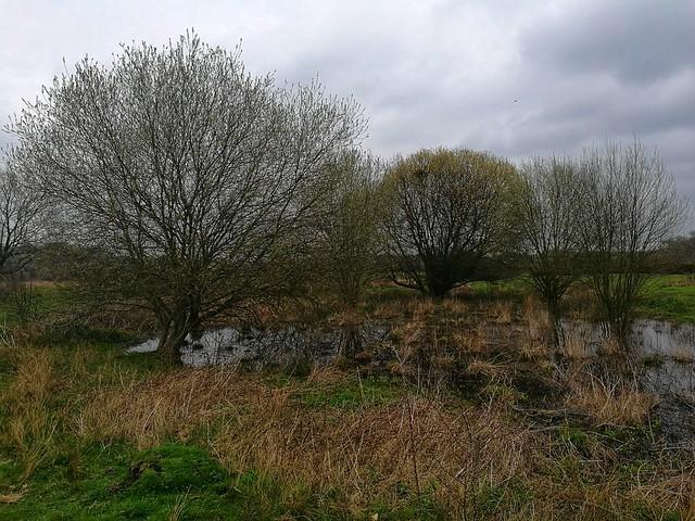 Croxley Moor Common
