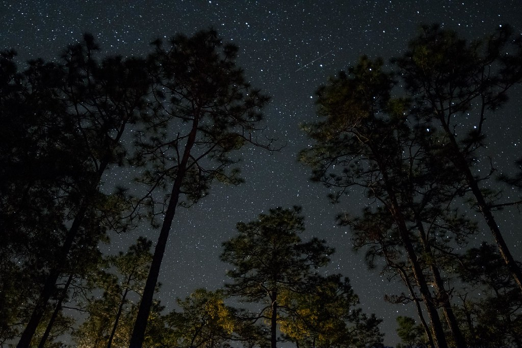 A Starry Night Sky in Apalachicola National Forest | Flickr