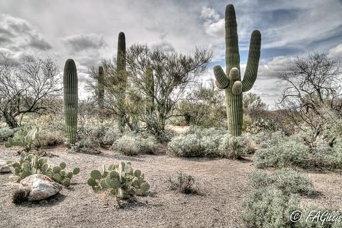 Saguaro East NP 18-05