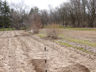 Crop Fields With Perennials   by pjchmiel