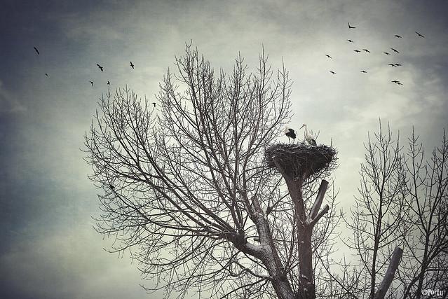 Alguien voló sobre el nido de las cigüeñas