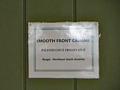 Smooth Front Caiman Sign. | by dccradio